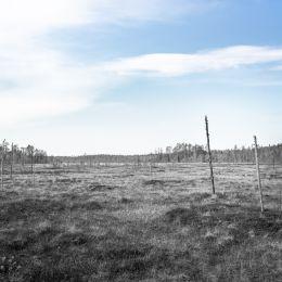 Tapion taival koitajoki maisemakuva 2